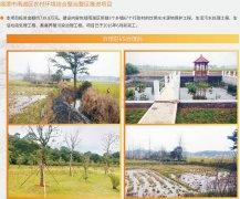雨湖农村综合环境整治
